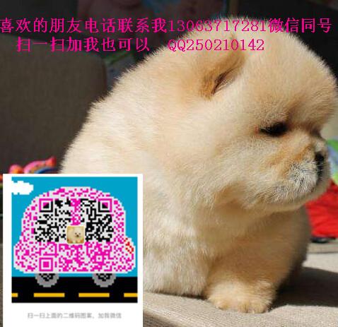 TB21UkrfSFjpuFjSspbXXXagVXa_!!498355394.jpg
